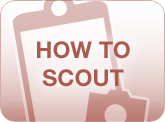 How to scout