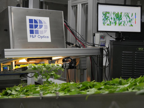 The processing plant modernized their produce sorting capabilities by replacing the use of cameras with chemical imaging technology