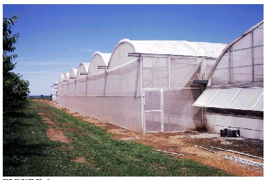 Screening of Greenhouses for Insect Exclusion