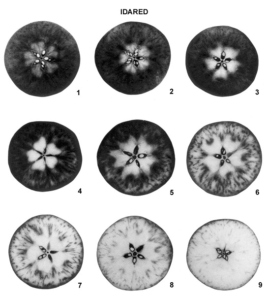 Pictorial chart of cross sections of Idared apples showing development of starch to sugar.