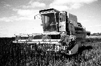 Combining short grain hemp varieties.