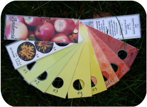 Figure 5. Use of a blush/ground colour and starch-staining chart is recommended for determining optimal harvest.
