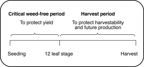 Figure 1. Weed control periods in carrots.