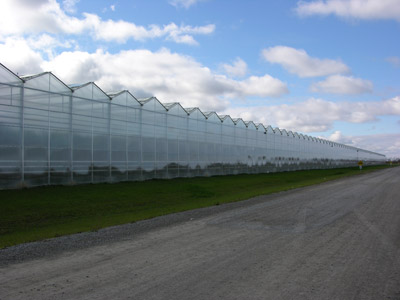 Figure 19. Photo showing a wide strip of lawn around a greenhouse to suppress growth of weeds.