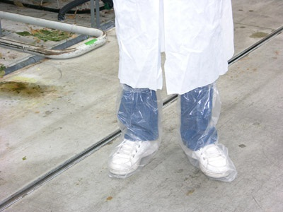 Figure 5. Photo of a visitor to the greenhouse dressed in lab coat and plastic shoe covers.