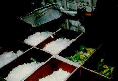 Figure 4. Cartons of bunched broccoli receiving ice during packaging.