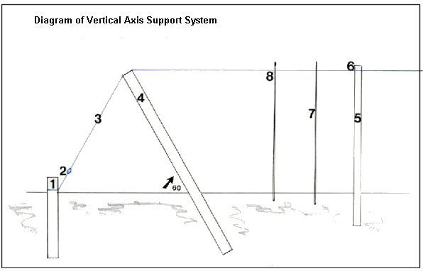 Diagram of trellis end posts wire and first post.