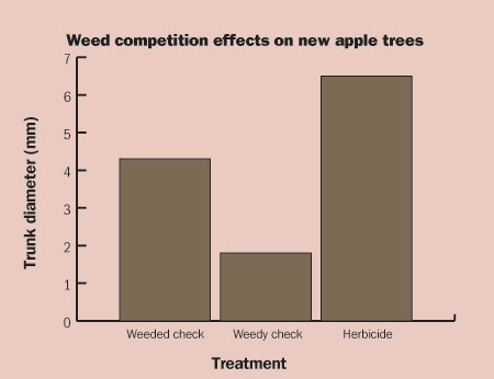 Figure 4-176. Weeds competing with newly planted apple trees cause severe growth reduction in only three months