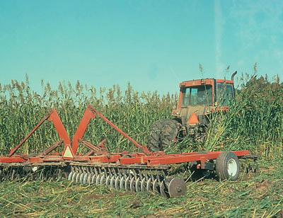 Figure 4-188. A green manure crop, like this Sudan-sorghum cross, can be incorporated in the fall prior to planting to suppress weeds and improve soil tilth