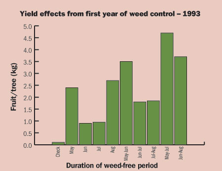 Figure 4-178. The yield on young Gala/M26 trees is directly related to the length of weed-free period in the planting year