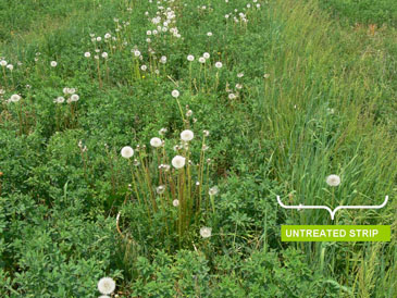 Fowl meadow grass control with Poast Ultra.