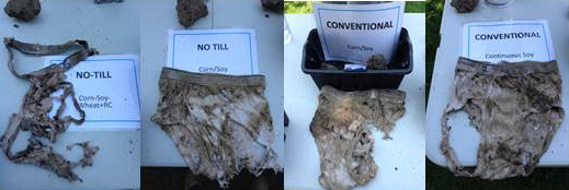 Figure 2: From left to right, cotton briefs dug up after 2 months of being buried
