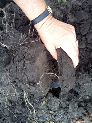 Compacted layers can develop over time or after a wet harvest like 2014 and interfere with root development.