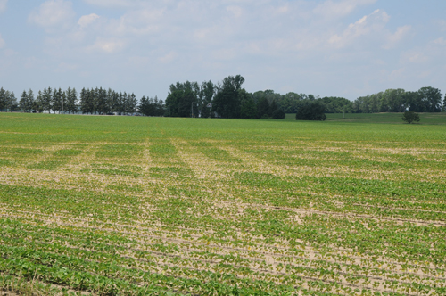Surface soil compaction can occur easily in the spring, particularly after a wet harvest. This field seemed to show every spring equipment pass.