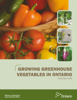 Growing Greenhouse Vegetables in Ontario