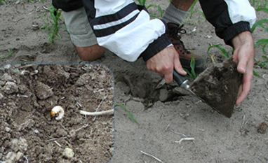 Digging soil for visual assessment