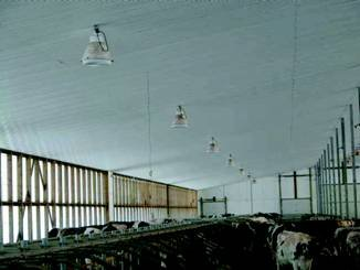 Figure 2: This image shows a free stall barn with consistent light from the open walls, and regularly spaced lights overhead.