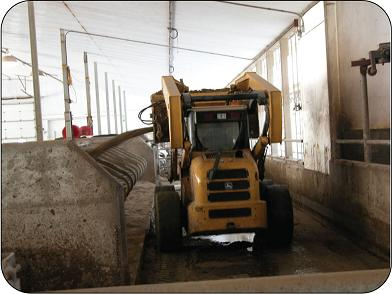Using a sand slinger mounted on a skid steer to fill free stalls.