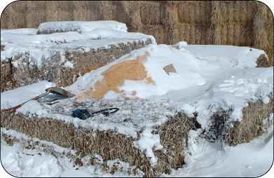 Compost bin using large bales for walls. Less substrate is required than for an open pile.