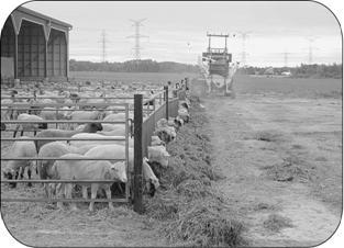 An open-air lamb feedlot with a barn and a yard equipped with a fence-line. The yard is an example of a permanent OCA.