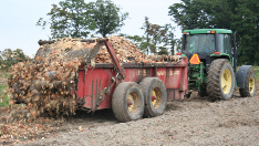 Picture of culled onions being applied on a field using a solid manure spreader.