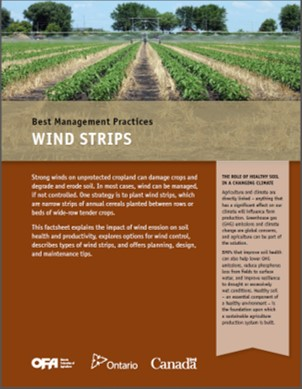 Wind Strips