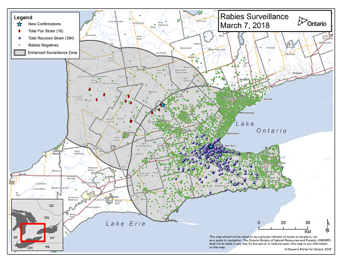 This image shows the OMNRF Wildlife Rabies Control and Surveillance Zone as of March 7, 2018. The image is a map showing the rabies control and surveillance zones surrounding the confirmed rabies cases in Ontario. The map is of an area of Southern Ontario including the following counties or regions: Hamilton, Haldimand, Halton, Perth, Oxford, Brant, Waterloo, Wellington, Middlesex, Elgin, Pell, Dufferin, Toronto, Bruce, Grey, Huron, Lambton, Durham, York, Welland, Niagara, Lake Ontario, and Lake Erie. There are now 394 confirmed raccoon strain rabies cases marked on the map since December 2015, 284 of which are located within Hamilton District. The remaining 110 cases are located in Haldimand-Norfolk County, the Niagara Region, Brant County and Halton Region. There are also 16 confirmed cases of Ontario fox strain rabies, 7 in Perth County, 4 in Huron County and 5 in Waterloo Region. A larger grey circle indicates the 50 km radius around the confirmed cases where enhanced rabies surveillance is occurring. There is a small map insert showing Southern Ontario with a red box indicating which area of Southern Ontario is zoomed in on the main map image.