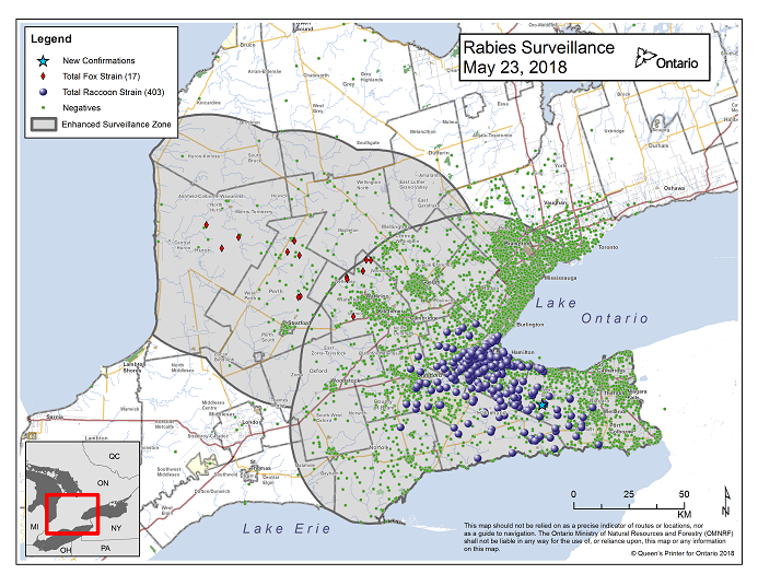 This image shows the OMNRF Wildlife Rabies Control and Surveillance Zone as of May 23, 2018. The image is a map showing the rabies control and surveillance zones surrounding the confirmed rabies cases in Ontario. The map is of an area of Southern Ontario including the following counties or regions: Hamilton, Haldimand, Halton, Perth, Oxford, Brant, Waterloo, Wellington, Middlesex, Elgin, Pell, Dufferin, Toronto, Bruce, Grey, Huron, Lambton, Durham, York, Welland, Niagara, Lake Ontario, and Lake Erie. There are now 403 confirmed raccoon strain rabies cases marked on the map since December 2015, 290 of which are located within Hamilton District. The remaining 113 cases are located in Haldimand-Norfolk County, the Niagara Region, Brant County and Halton Region. There are also 17 confirmed cases of Ontario fox strain rabies, 7 in Perth County, 4 in Huron County and 6 in Waterloo Region. A larger grey circle indicates the 50 km radius around the confirmed cases where enhanced rabies surveillance is occurring. There is a small map insert showing Southern Ontario with a red box indicating which area of Southern Ontario is zoomed in on the main map image.