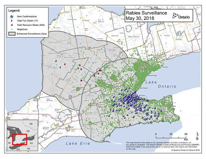 This image shows the OMNRF Wildlife Rabies Control and Surveillance Zone as of May 30, 2018. The image is a map showing the rabies control and surveillance zones surrounding the confirmed rabies cases in Ontario. The map is of an area of Southern Ontario including the following counties or regions: Hamilton, Haldimand, Halton, Perth, Oxford, Brant, Waterloo, Wellington, Middlesex, Elgin, Pell, Dufferin, Toronto, Bruce, Grey, Huron, Lambton, Durham, York, Welland, Niagara, Lake Ontario, and Lake Erie. There are now 405 confirmed raccoon strain rabies cases marked on the map since December 2015, 291 of which are located within Hamilton District. The remaining 114 cases are located in Haldimand-Norfolk County, the Niagara Region, Brant County and Halton Region. There are also 17 confirmed cases of Ontario fox strain rabies, 7 in Perth County, 4 in Huron County and 6 in Waterloo Region. A larger grey circle indicates the 50 km radius around the confirmed cases where enhanced rabies surveillance is occurring. There is a small map insert showing Southern Ontario with a red box indicating which area of Southern Ontario is zoomed in on the main map image.