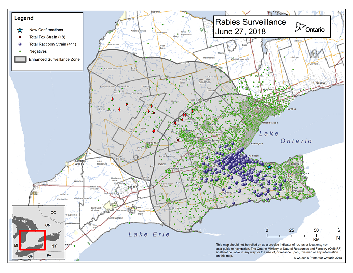 This image shows the OMNRF Wildlife Rabies Control and Surveillance Zone as of June 27, 2018. The image is a map showing the rabies control and surveillance zones surrounding the confirmed rabies cases in Ontario. The map is of an area of Southern Ontario including the following counties or regions: Hamilton, Haldimand, Halton, Perth, Oxford, Brant, Waterloo, Wellington, Middlesex, Elgin, Pell, Dufferin, Toronto, Bruce, Grey, Huron, Lambton, Durham, York, Welland, Niagara, Lake Ontario, and Lake Erie. There are now 411 confirmed raccoon strain rabies cases marked on the map since December 2015, 295 of which are located within Hamilton District. The remaining 116 cases are located in Haldimand-Norfolk County, the Niagara Region, Brant County and Halton Region. There are also 18 confirmed cases of Ontario fox strain rabies, 7 in Perth County, 4 in Huron County, 6 in Waterloo Region and 1 in Wellington-Dufferin-Guelph. A larger grey circle indicates the 50 km radius around the confirmed cases where enhanced rabies surveillance is occurring. There is a small map insert showing Southern Ontario with a red box indicating which area of Southern Ontario is zoomed in on the main map image.