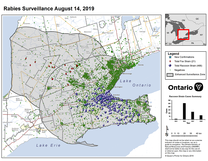 This image shows the OMNRF Wildlife Rabies Control and Surveillance Zone as of August 14, 2019. The image is a map showing the rabies control and surveillance zones surrounding the confirmed rabies cases in Ontario. The map is of an area of Southern Ontario including the following counties or regions: Hamilton, Haldimand, Halton, Perth, Oxford, Brant, Waterloo, Wellington, Middlesex, Elgin, Pell, Dufferin, Toronto, Bruce, Grey, Huron, Lambton, Durham, York, Welland, Niagara, Lake Ontario, and Lake Erie. There are now 466 confirmed raccoon strain rabies cases marked on the map since December 2015, 325 of which are located within Hamilton District. The remaining 139 cases are located in Haldimand-Norfolk County, the Niagara Region, Brant County and Halton Region. There are also 21 confirmed cases of Ontario fox strain rabies, 8 in Perth County, 4 in Huron County, 6 in Waterloo Region, 3 in Wellington-Dufferin-Guelph. A larger grey circle indicates the 50 km radius around the confirmed cases where enhanced rabies surveillance is occurring. There is a small map insert showing Southern Ontario with a red box indicating which area of Southern Ontario is zoomed in on the main map image.