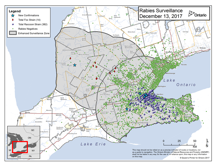 This image shows the OMNRF Wildlife Rabies Control and Surveillance Zone as of December 13, 2017. The image is a map showing the rabies control and surveillance zones surrounding the confirmed rabies cases in Ontario. The map is of an area of Southern Ontario including the following counties or regions: Hamilton, Haldimand, Halton, Perth, Oxford, Brant, Waterloo, Wellington, Middlesex, Elgin, Pell, Dufferin, Toronto, Bruce, Grey, Huron, Lambton, Durham, York, Welland, Niagara, Lake Ontario, and Lake Erie. There are now 382 confirmed raccoon strain rabies cases marked on the map since December 2015, 276 of which are located within Hamilton District. The remaining 106 cases are located in Haldimand-Norfolk County, the Niagara Region, Brant County and Halton Region. There are also 14 confirmed cases of Ontario fox strain rabies, 7 in Perth County, 4 in Huron County and 4 in Waterloo Region. A larger grey circle indicates the 50 km radius around the confirmed cases where enhanced rabies surveillance is occurring. There is a small map insert showing Southern Ontario with a red box indicating which area of Southern Ontario is zoomed in on the main map image.