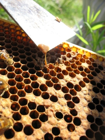 AFB can easily infect beekeeping equipment.