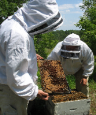 Photo of Apiary Inspectors acdtive in the field