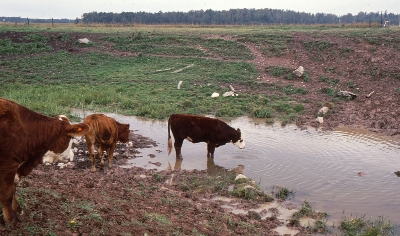 Livestock access to watercourses for Soil and water facts
