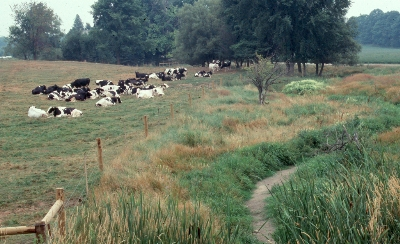 Livestock Access To Watercourses