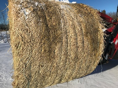 Hay that has been wrapped showing little spoilage.
