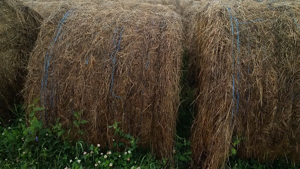 Bales set out with a gap between them, so moisture is not trapped between bales.