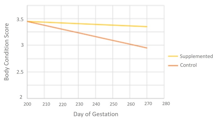 Body Condition Score during late gestation