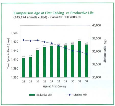 Graph 1 showing Comparison Age at First Calving vs Productive Life