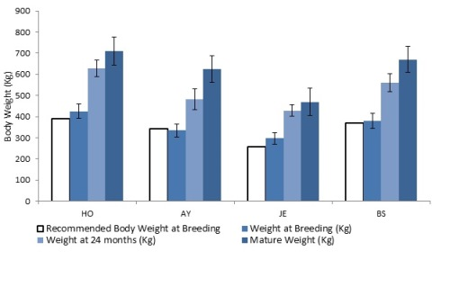 Body weight (kg) at breeding, 24 months and mature weights for Holstein, Ayrshire, Jersey and Brown Swiss breeds from dairy farms from Valacta in Quebec. Recommended weight (kg) at breeding based on 55 per cent of average mature weight of Holstein, Ayrshire, Jersey and Brown Swiss breeds.
