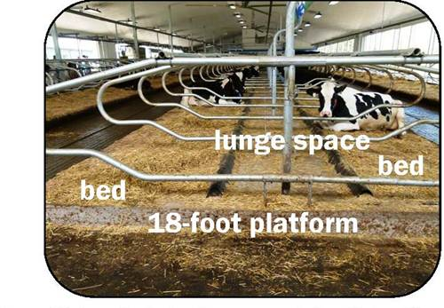 Figure 12 shows a side view photo taken at the end of a row of head-to-head free stalls. The photo is labelled with text to show the bed, lunge space and the 18-foot platform.