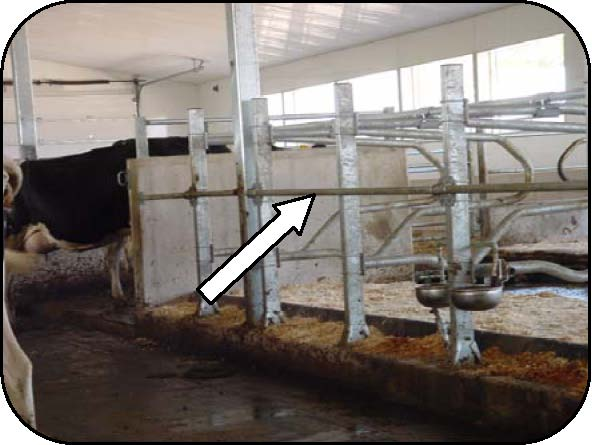 Figure 19 is a photo of a deterrent bar attached to the stall divider support posts at the front of free stalls facing a feed alley. The bar is mounted high enough so that it does not interfere with lunging motions.