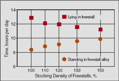 Figure 27 is a chart with data for lying time and standing time in free stalls. The vertical axis shows time in hours per day with a scale of 6 to 14.  The horizontal axis shows stocking density of freestalls as a percentage with a scale from 100 to 150 from left to right. The plots show that lying in the stall decreased and standing in the stall increased as stocking density increased from 100 to 150%.