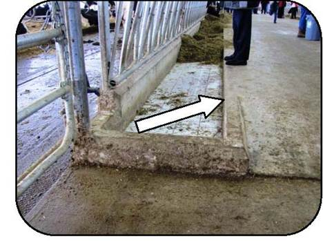 Figure 33 shows an elevated drive alley that is about 6 inches higher than the feeding table of the feed bunk. The design helps to keep feed within reach of the cows.