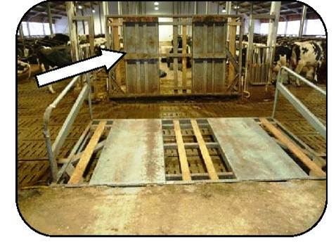 Figure 36 shows a lift bridge across a cow alley at the entrance to the feed alley. The bridge can be lowered for tractor and TMR mixer traffic to cross the cow alley without contaminating tires with manure. Likewise, it can be raised for cow traffic.