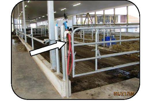 Figure 39 shows a water hose adjacent to a person pass in the feed bunk and a gate. The strategic position of the water hose lets workers wash their boots when exiting the cow alley and before walking in the feeding alley.