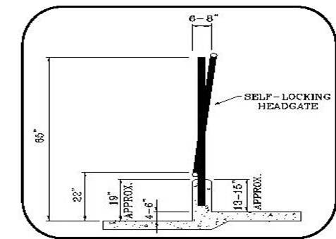 Figure 41 is a diagram showing dimensions for a typical self-locking front and feed barrier at a feed bunk.  The distance from the cow alley to the manger surface and to the top of the manger curb is 4 inches and 19 inches, respectively. The top rail of the lockups is about 65 inches above the cow alley.