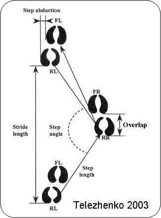 Fig10aa-Claw prints of a cow show several components of walking - including stride, step, step angle, overlap and abduction.