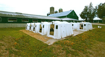 Image of Calf Hutches